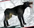 Dog of Darkness