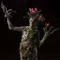 Silk Floss Tree Creature
