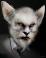 Kitsune (Grimm)