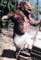 Mutant Bear