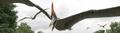 Pteranodon Primeval