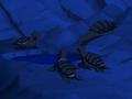 Turtle Seal Avatar