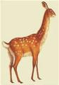 Common Rabbuck