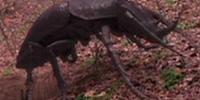 Giant Beetle (Caved In: Prehistoric Terror)