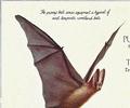 Purrip Bat