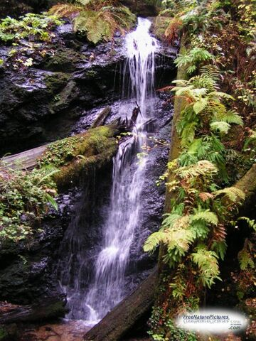 File:Forestwaterfall2.jpg