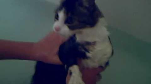 Cat Saying No to a bath