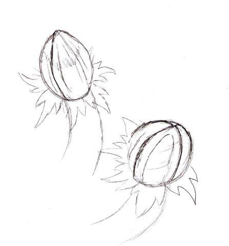 File:Pod tail 1.jpg