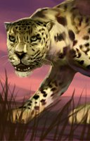 Animal cat leopard