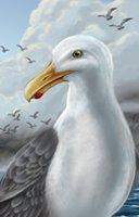 Animal seagull
