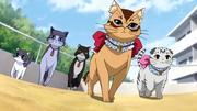 Nyan Koi - 12-yakuza cat