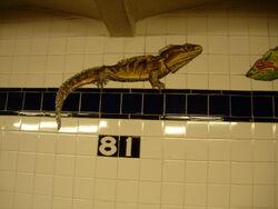 81 lizard