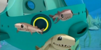 Cookiecutter Sharks