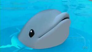 Baby Dolphin .mp4 000149315