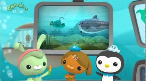 Octonauts Creature Report The Whale Shark Ep 1