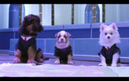 And Then They Were Puppies-Screencap