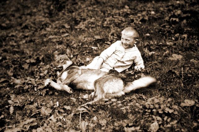 Datei:Hermann wehrs hund.jpg