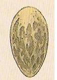 American Dragon Egg