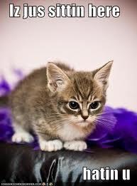 File:Funny cat 15.jpg