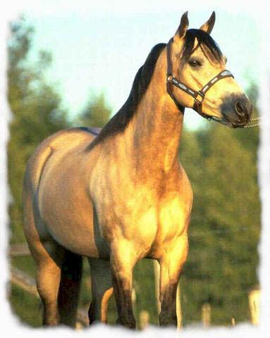 File:Horses1.jpg