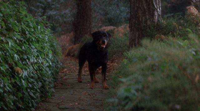File:OriginalHellhound.png