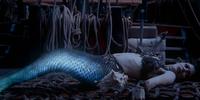 Conch Shells/Gallery