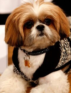 David Vickers (dog)