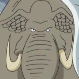 File:Sea Elephant Portrait.png