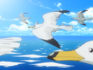 Seaguls-A to Z.png