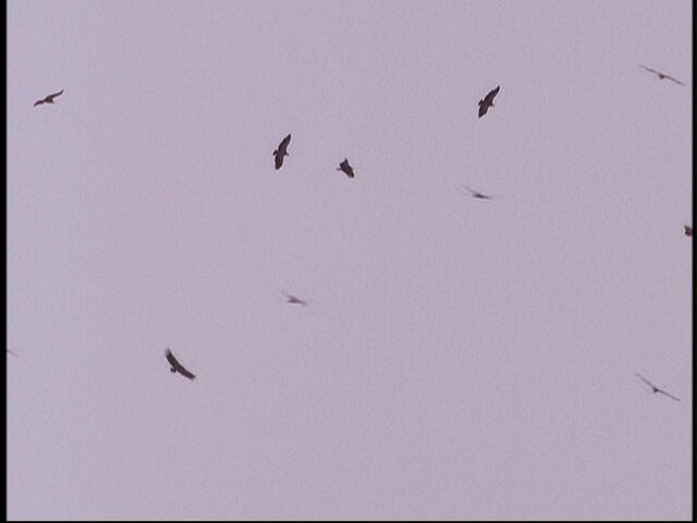File:122 goroup of ravens.jpg