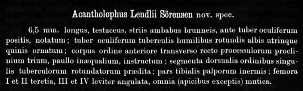 Acantholophus Lendlii Sørensen in Lendl 1894 page 26