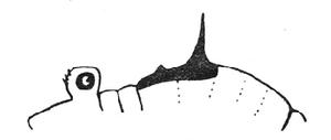 Gagrella palnica