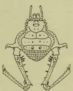 Gonyleptes curvicornis