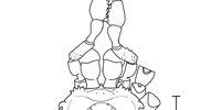 Heteropachylus