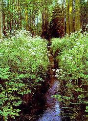 Refuge Naturel de la Marache à Lasne, Brabant Wallon