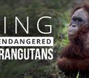 Orangutan Island Wiki