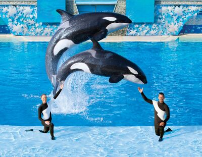 SeaWorld Shamu and Trainers
