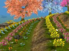 Mellow hop flower field
