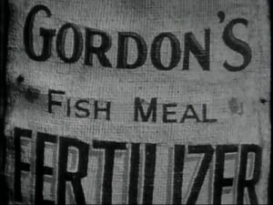 Gordon's FishMealFertilizer