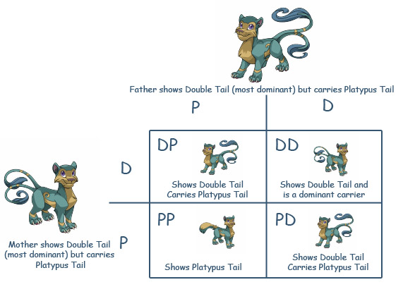 File:Punnet-square feline-double-tail.jpg