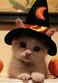 Thumbnail for version as of 14:02, November 24, 2013