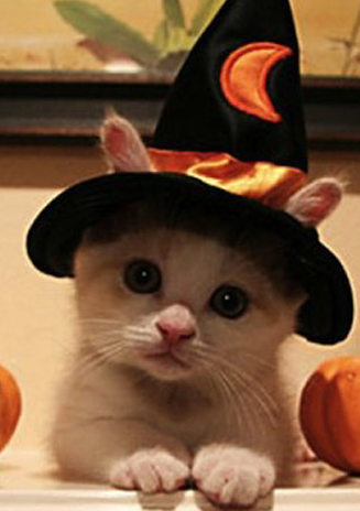 File:Kitty.2.png