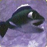 File:JumpingFish.jpg