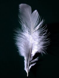 A single white feather closeup