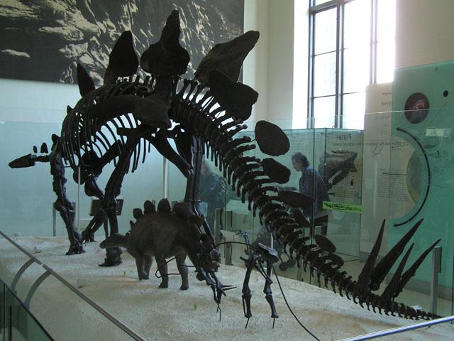 File:Stegosaurus Struct.jpg