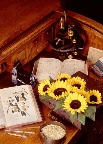 File:Botany.jpg