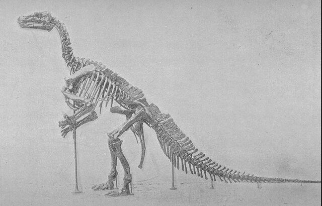 File:Iguanodonskel.jpg