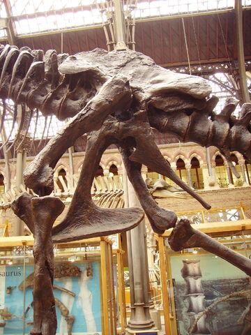 File:Tyrannosaurus pelvis left.JPG