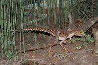 Amnh29sinosaur