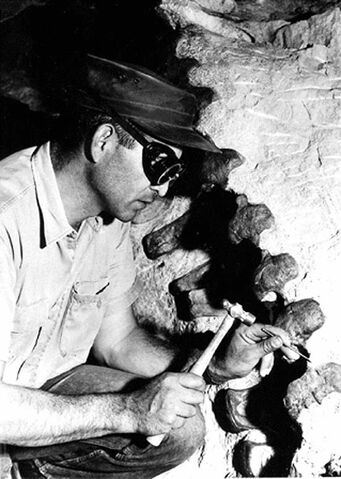 File:Paleontologist chipping.jpg